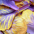 Purple Cabbage by Tina M Wenger