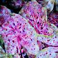 Purple Caladium by Diane DiMarco