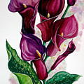 Purple Callas by Karin  Dawn Kelshall- Best