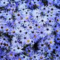Purple Carpet by Des Brownlie