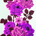 Purple Climbing Roses by Brenda Kean