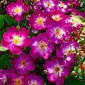 Purple Cluster 2 by Bennett Thompson