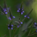 Purple Cones by Linda DeBoard