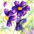 Purple Cosmos by Lila Van Pelt