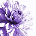 Purple Dahlia Floral by Jennie Marie Schell