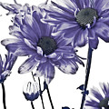 Purple Daisies by Robin Lynne Schwind