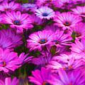 Purple Daisies by Vicki France
