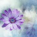 Purple Daisy Swirl by Terry Davis