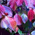 Purple Fall Leaves by Ian  MacDonald