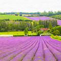 Purple Fields Of Love by Zahra Majid
