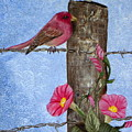 Purple Finch And Morning Glories by Terri Mills