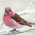 Purple Finch by Lynn Quinn