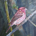 Purple Finch by Sal Cutrara