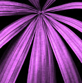 Purple Fireworks by Cathi Abbiss Crane