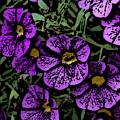 Purple Floral Fantasy by David Lane