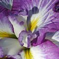 Purple Flower 2 by Holly Wolfe