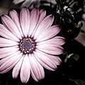 Purple Flower by Al  Mueller
