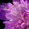 Purple Flower And Water Drops by Angela Murdock