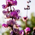 Purple Flower by Carla Engel