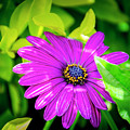 Purple Flower by Daniel Murphy
