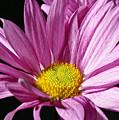 Purple Flower by Edward Myers