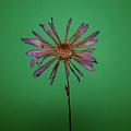 Purple Flower Green Background by Daniel Hernandez