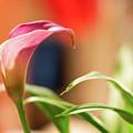 Purple Flower by John Kosh