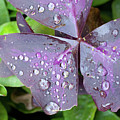 Purple Flower by John Magyar Photography