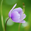 Purple Flower Looking Right Side by Ersoy Basciftci