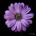 Purple Flower by Tim Wemple