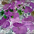Purple Flower Wishes by Barbara Searcy