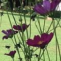 Purple Flowers by Debra Lynch