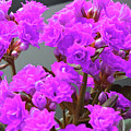 Purple Flowers by Donna Tanael