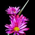 Purple Flowers by Edward Myers