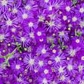 Purple Flowers by Frank Tschakert