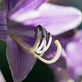 Purple Flowers by Michelle Himes