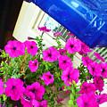 Purple Flowers On White Window 2 by Korynn Neil