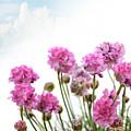 Purple Flowers by Svetlana Foote