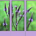 Purple Flowers Through A Window by Smilin Eyes  Treasures