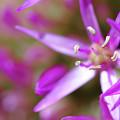 Purple Fragrance by Brady Lane