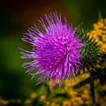 Purple Fringe by Grace Grogan