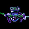 Purple Green Ghost Frog by Nick Gustafson