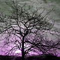 Purple Haze Across The Sky by Reva Steenbergen