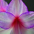 Purple Haze by Donna Shahan