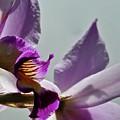 Purple Haze  by John Taylor