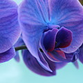 Purple Heart by Lynn Wist