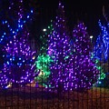 Purple Holiday Lights by Susan Brown