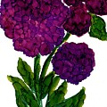 Purple Hydrangea by Gayle Haagensen