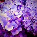 Purple Hydrangeas by Jane Izzy Designs