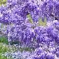 Purple Impression  by Susan Reynolds Holloway